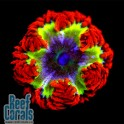 ULTRA Rock Flower Anemone Анемон